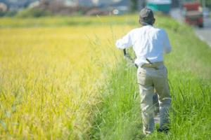 農地転用が必要な農地・田の画像