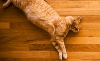 床暖房の床で昼寝する猫の画像